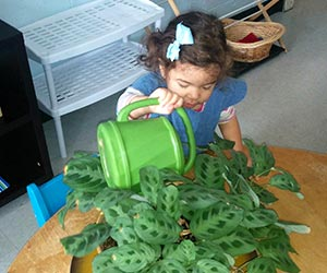 Toddler class practical life watering plants